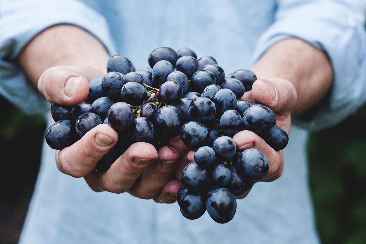 PIC-napa-grapes